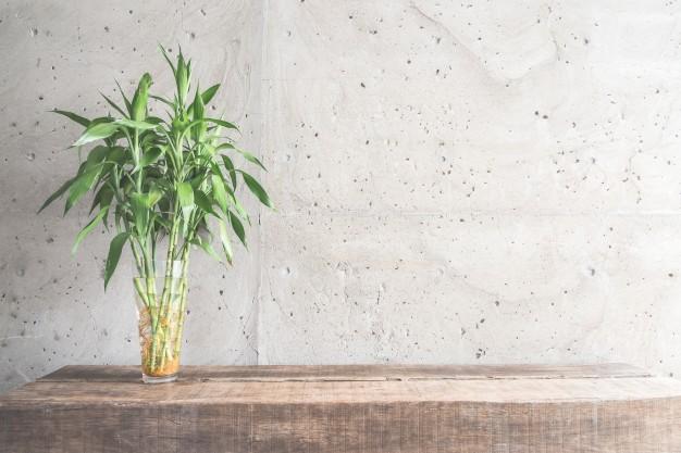 bambus og plante