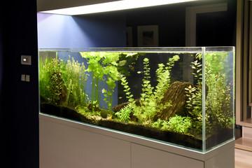stort hvidt akvarie