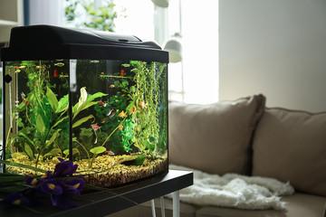 sort akvarie i stue